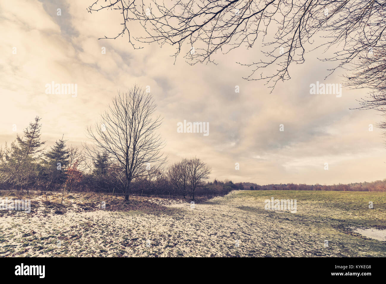 Rural field in the winter with barenaked trees and new fallen snow - Stock Image