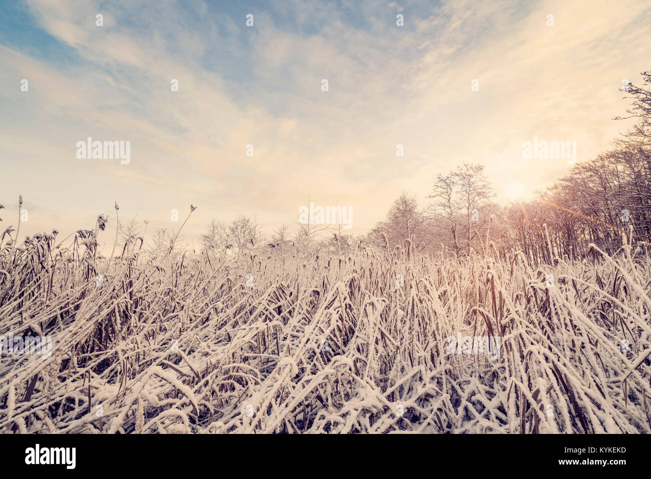 Wilderness with frozen nature in the winter in the morning sunrise - Stock Image