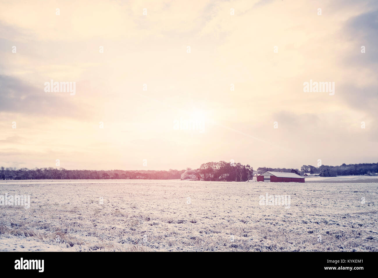 Rural winter landscape with a red barn on a field covered with snow in the sunrise - Stock Image