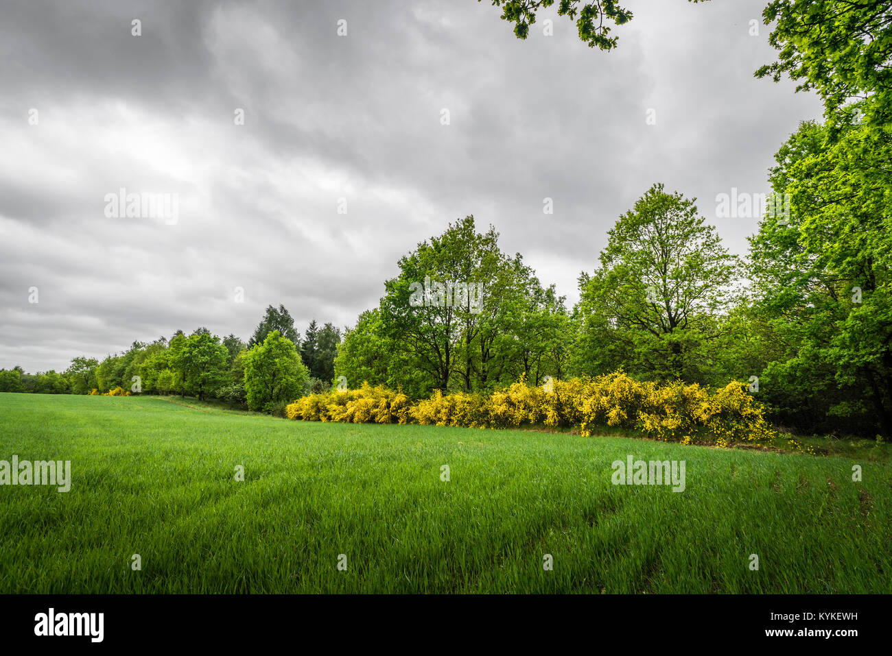 Cloudy weather over a rural field with broom bushes and trees in a countryside - Stock Image