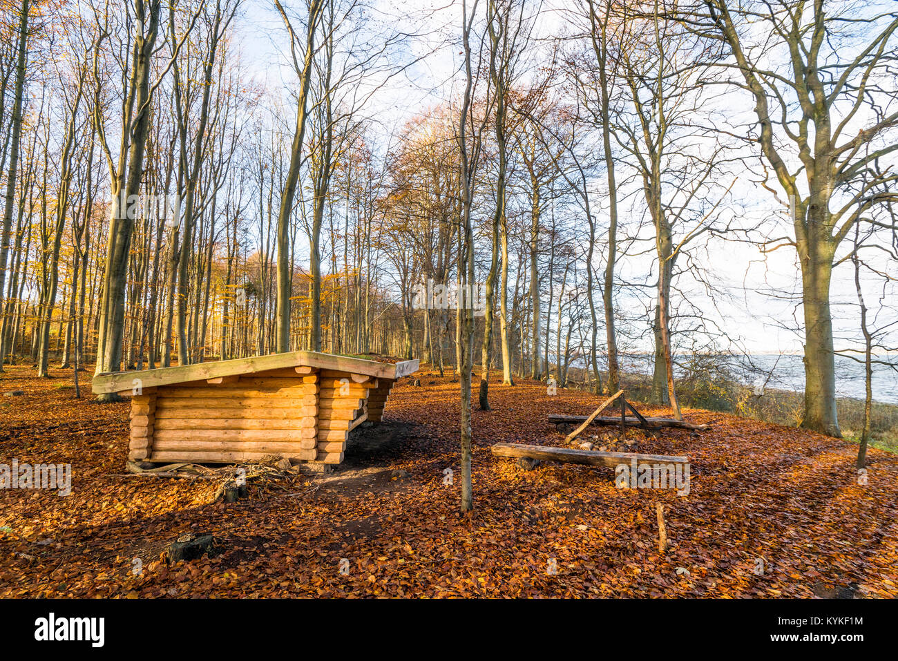 Shelter in the outdoors in a forest with tall trees in the autumn - Stock Image