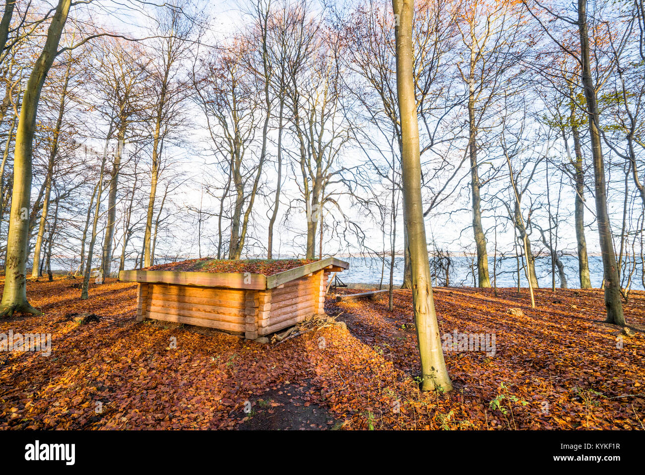 Wooden shelter in a forest with autumn leaves on the ground in the fall - Stock Image