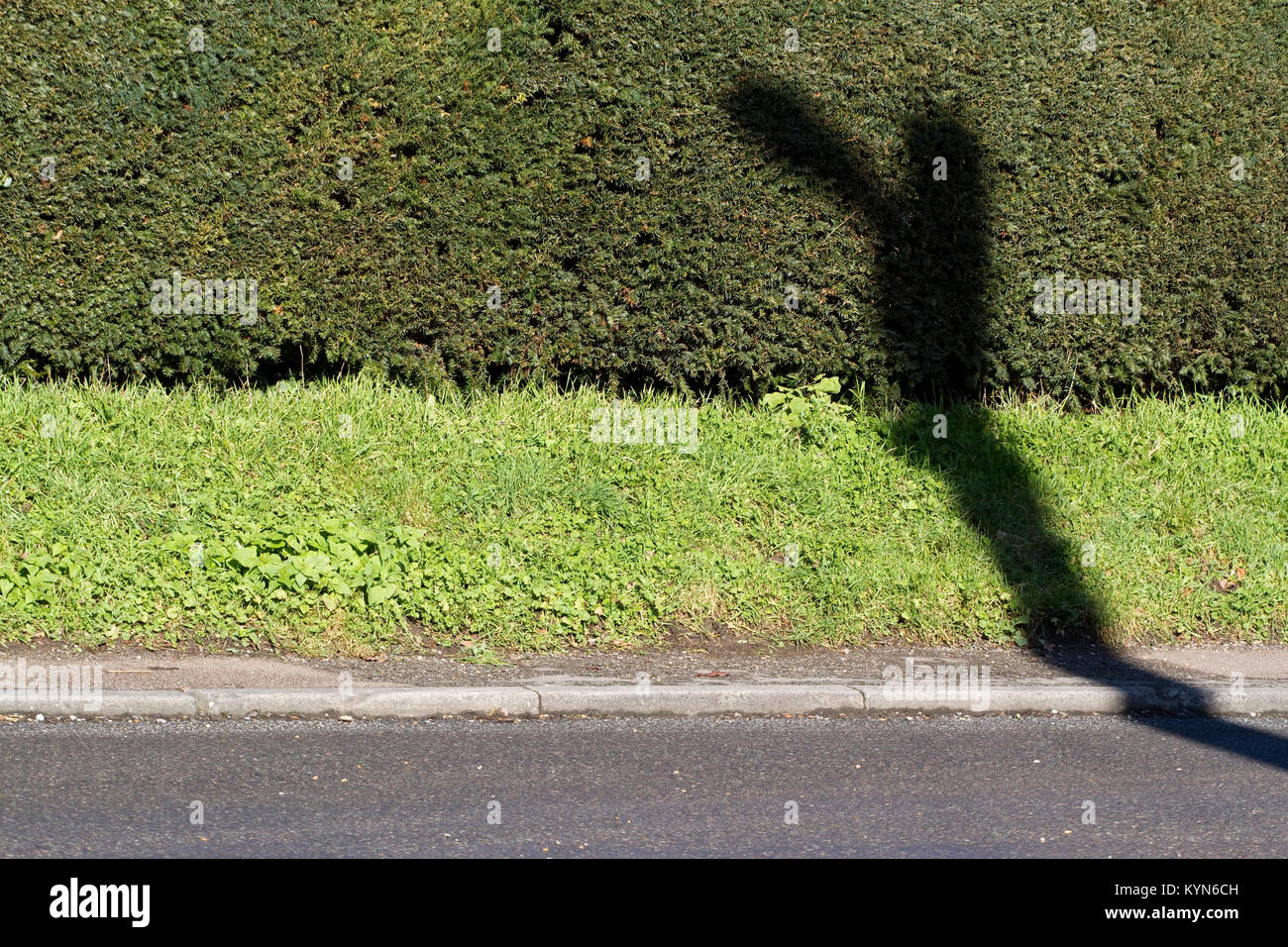 Odd shaped shadow being cast by a street light on a hedge and grass verge - Stock Image