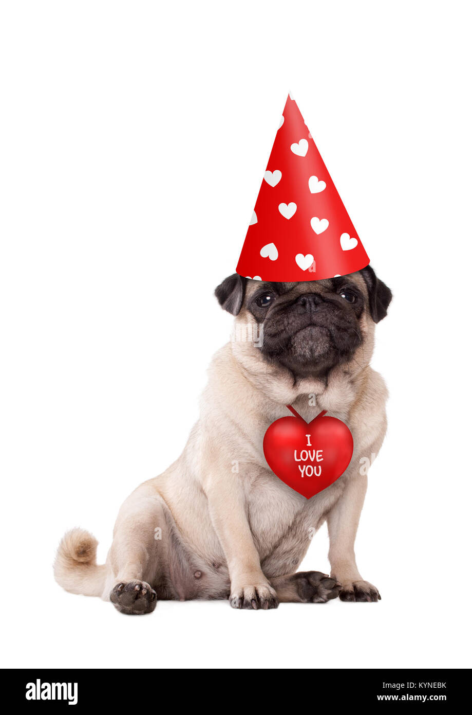 Lovely cute valentine 39 s day puppy pug dog sitting down - Valentines day pictures with puppies ...