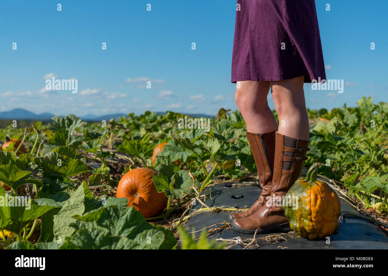 Heirloom Pumpkin and Woman with Copy Space Over Pumpkin Patch - Stock Image