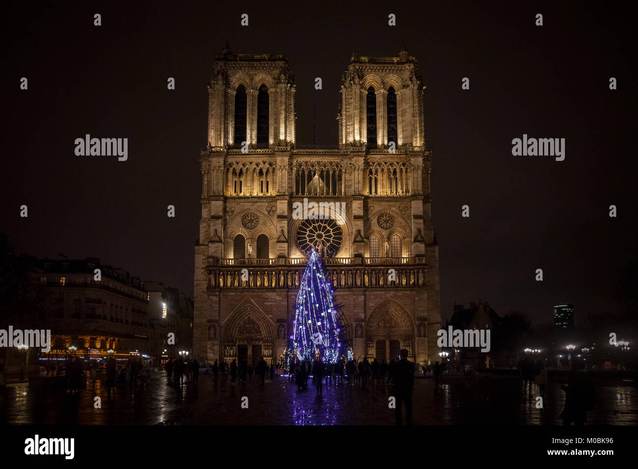 PARIS, FRANCE - DECEMBER 20, 2017:  Notre Dame de Paris Cathedral at night with the traditional Christmas tree in - Stock Image