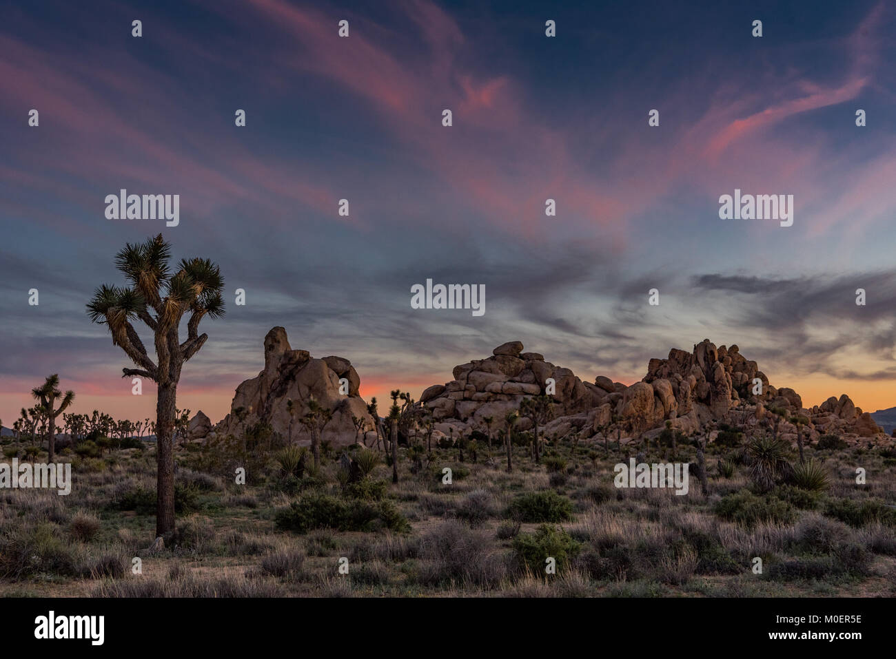 Subtle Sunset Over Joshua Tree and Boulders - Stock Image