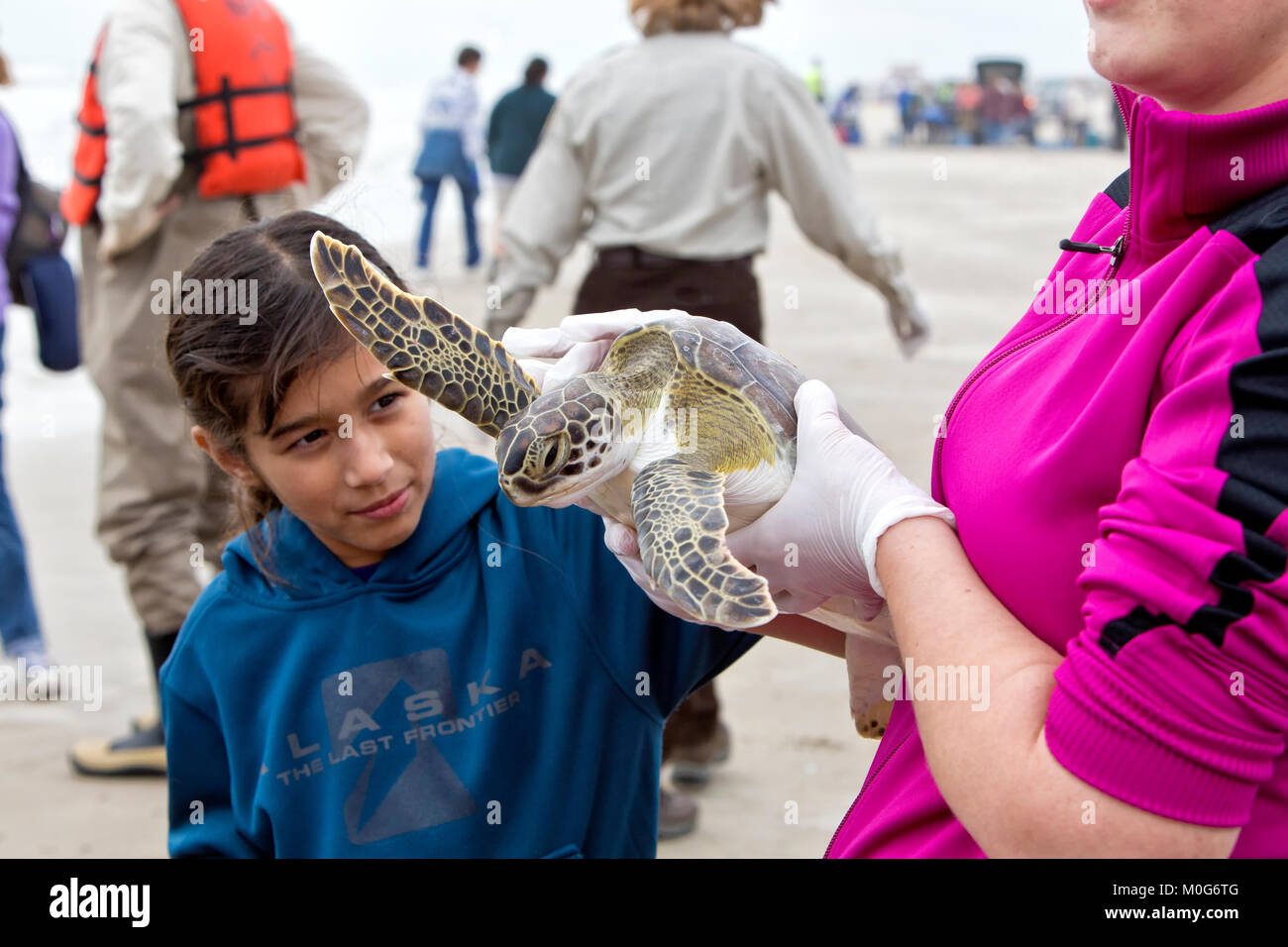 Volunteer with daughter carrying rehabilitated Kemp's Ridley Sea Turtle 'Lepidochelys kempii' for release. - Stock Image