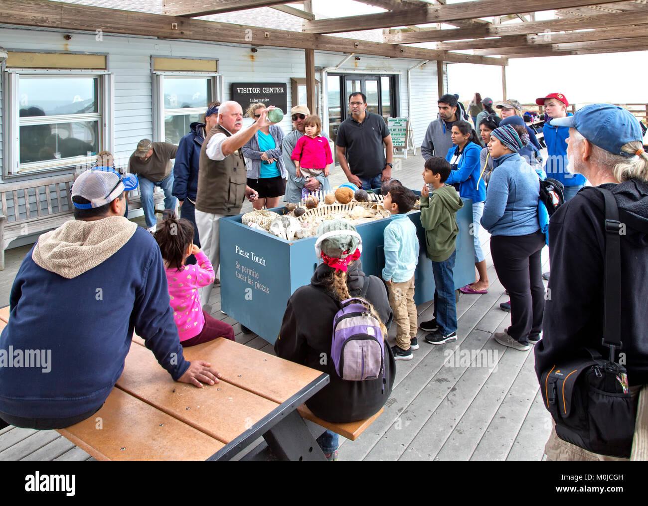 Volunteer explaining  various wildlife & items found on this coast beach. - Stock Image