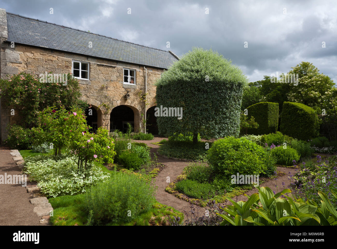 In the physic garden with the weeping silver-leafed pear tree mid-way through its summer clipping and the three - Stock Image