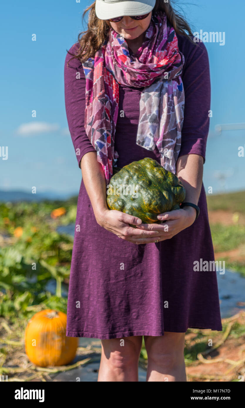 Close Up of Woman Holding Bumpy Pumpkin in patch - Stock Image