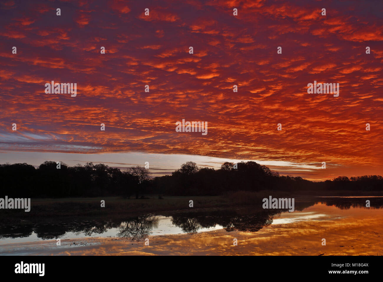 Sunrise with Altocumulus clouds over the Löbben Lake,Biosphere Reserve Middle Elbe,Saxony-Anhalt,Germany - Stock Image