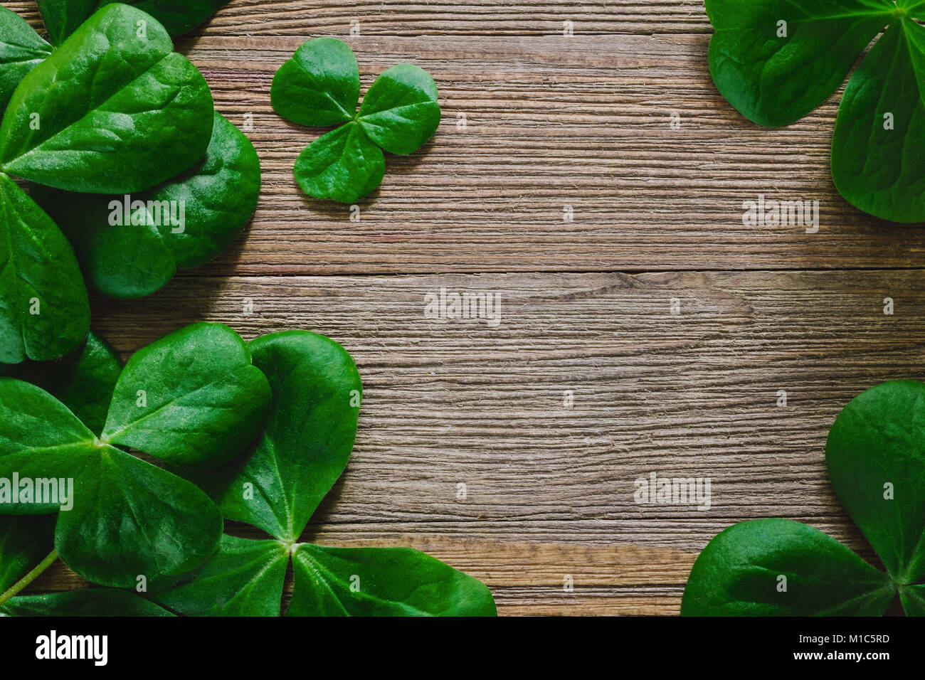 Shamrocks Arranged on Rustic Wooden Table with Room for Copy - Stock Image