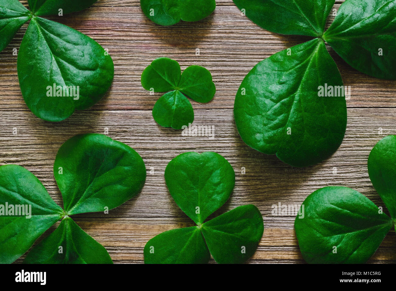 Shamrocks Arranged on Rustic Wooden Table - Stock Image