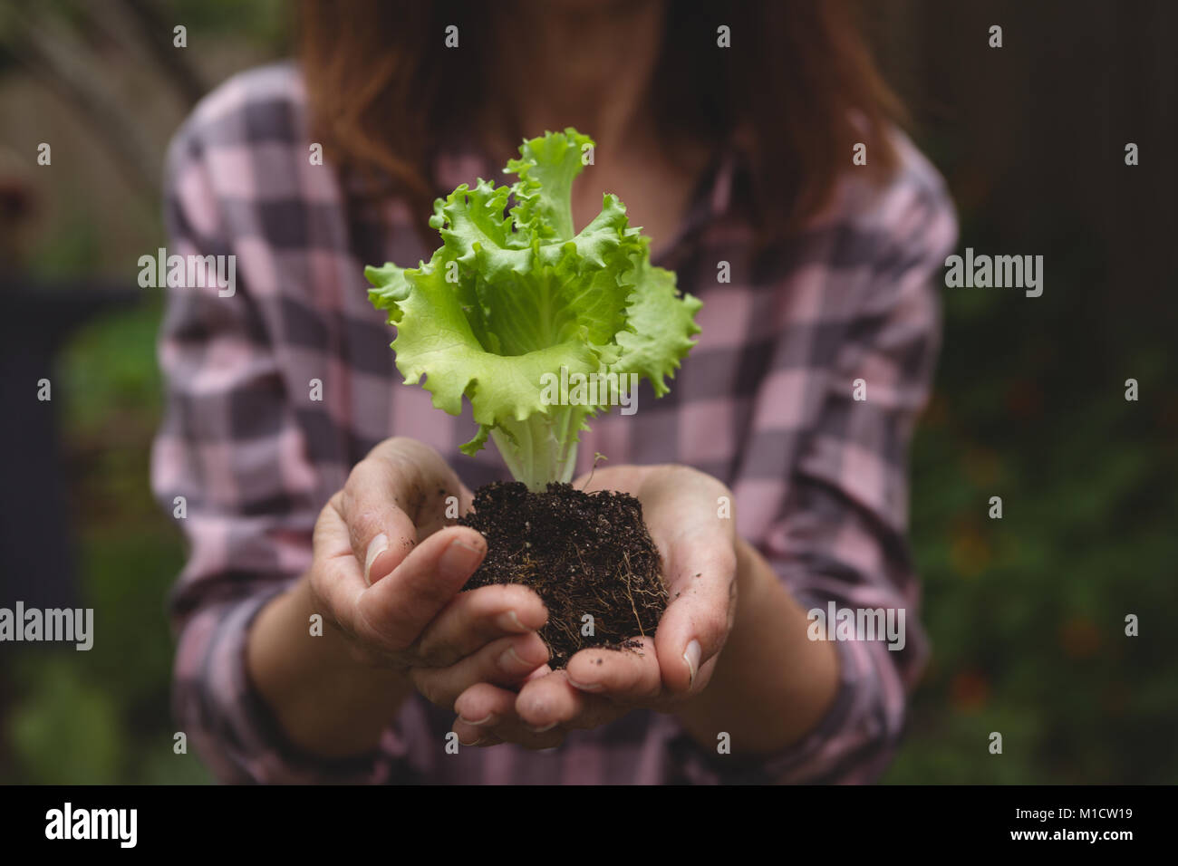 Woman holding plant in hand - Stock Image