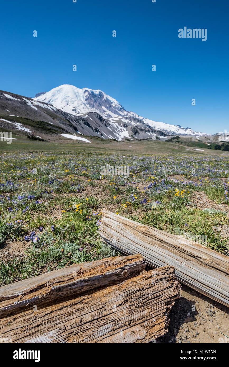 Logs and Wild Flowers Below Mount Rainier - Stock Image