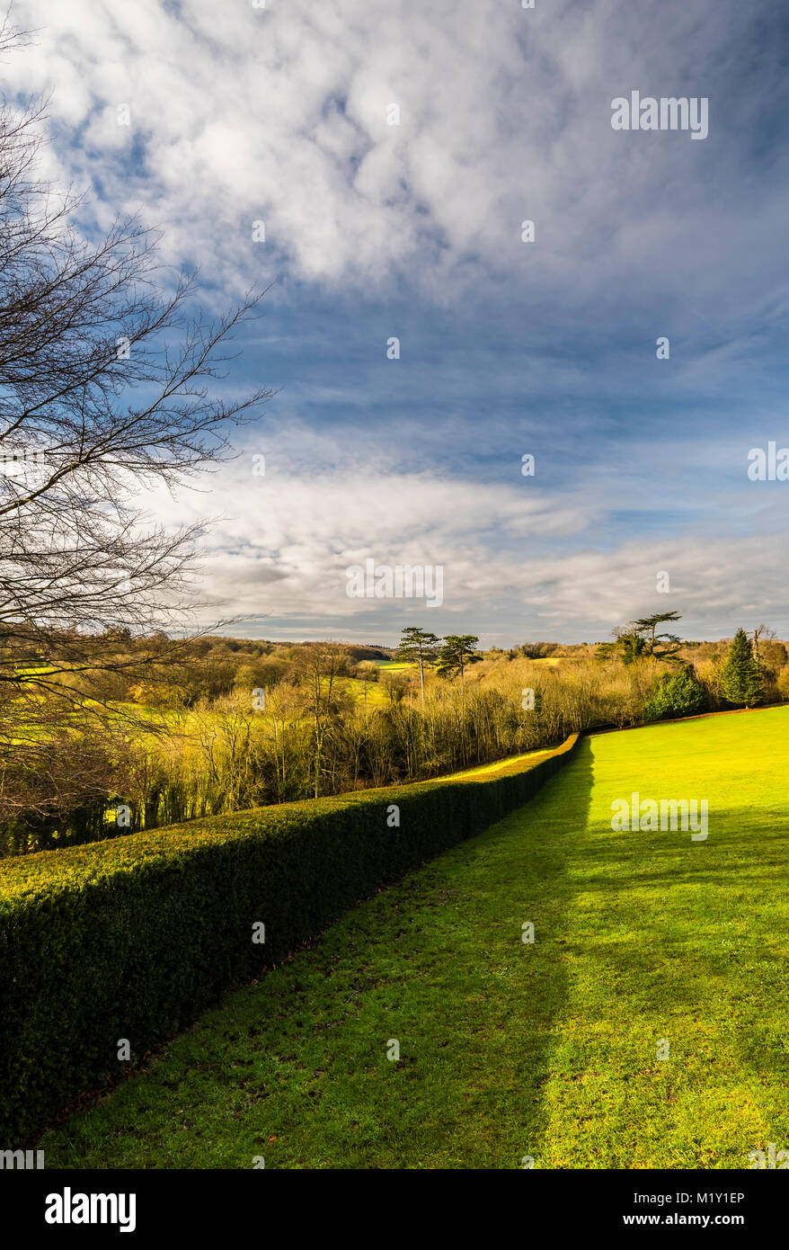 Long line of hedge boundary at Polesden Lacey, Surrey, UK - Stock Image