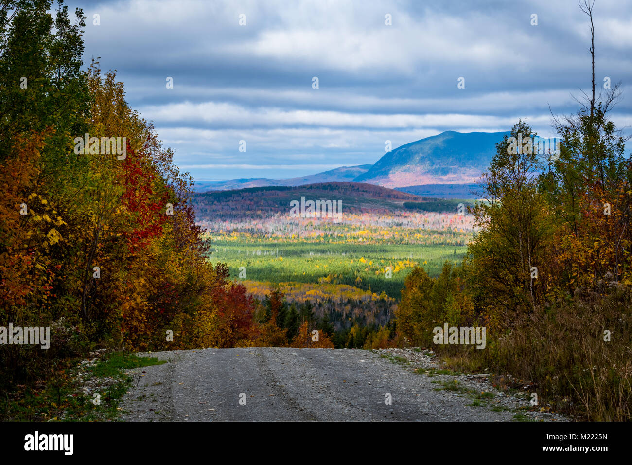 The Forest Over the Edge of dropoff on gravel road - Stock Image