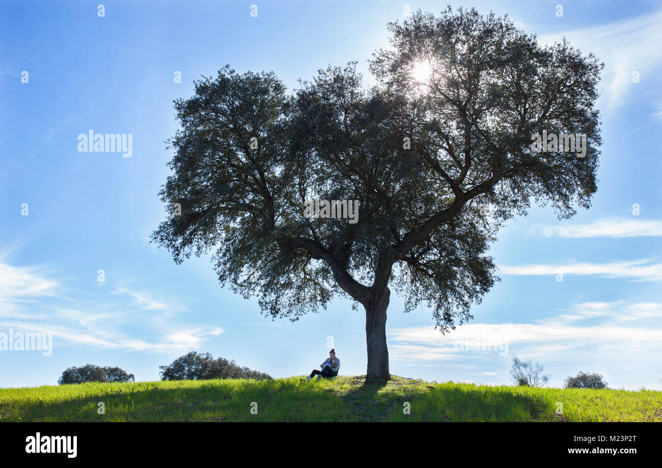 Mother breastfeeding toddler boy under tree of life. Extended breastfeeding in nature concept - Stock Image