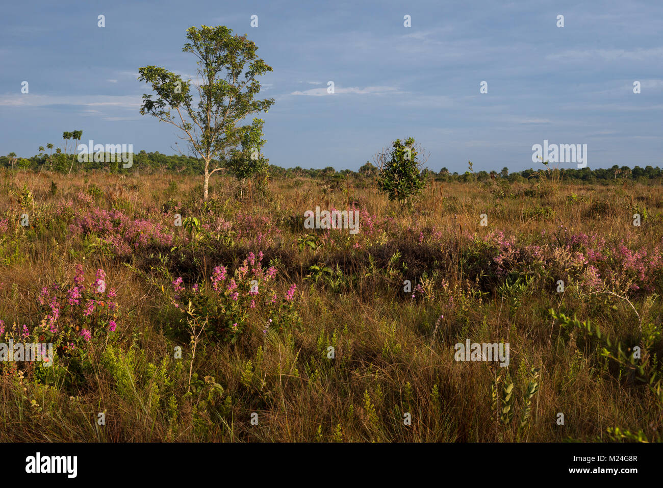Grassland at Emas National Park, Goiás, Brazil - Stock Image