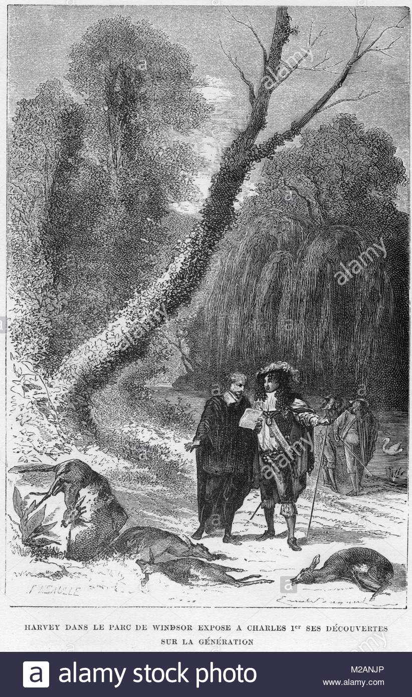 William Harvey - Stock Image