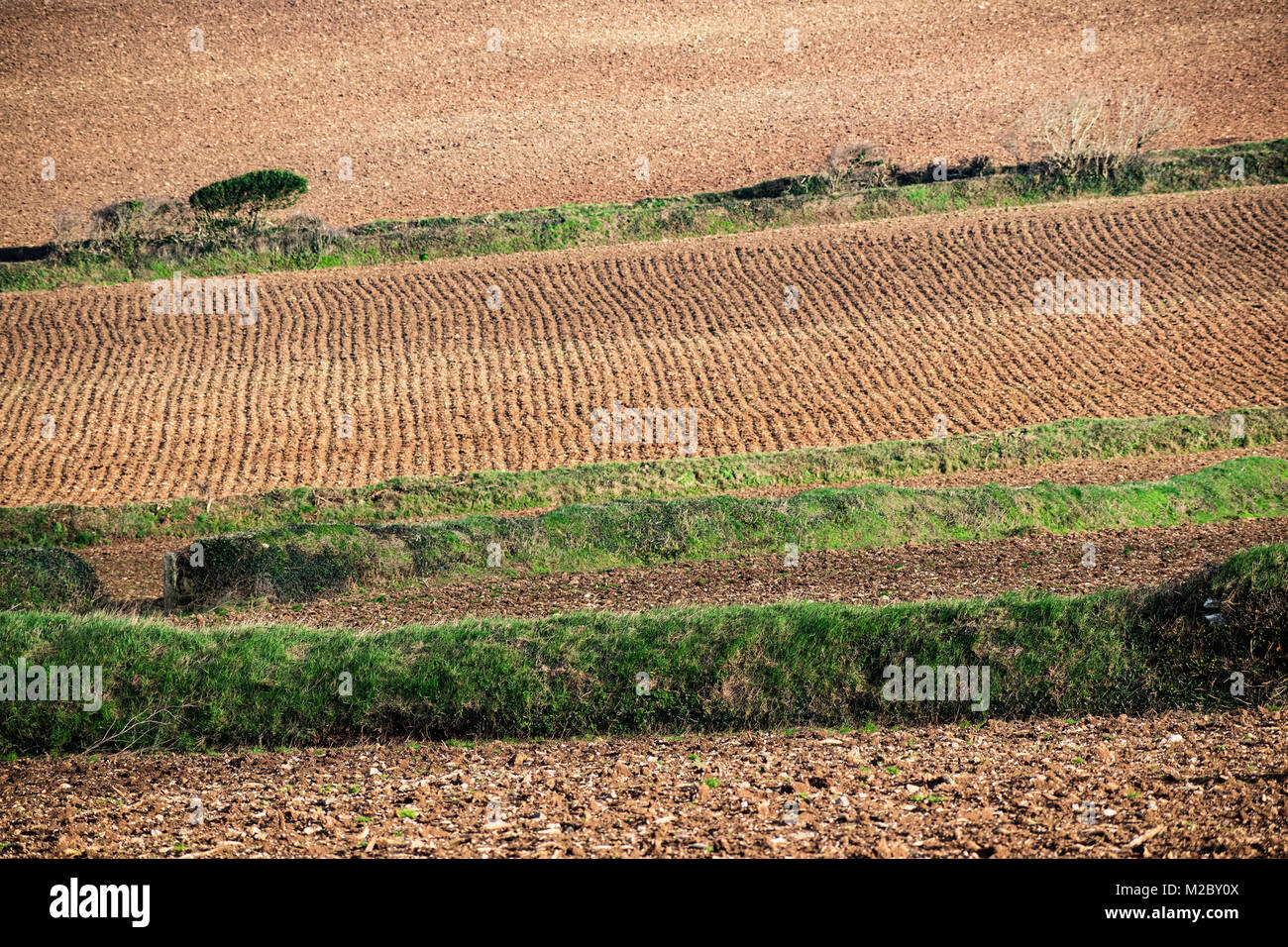 agriculture, farming cultivated fields prepared for planting crops, cornwall, uk. - Stock Image