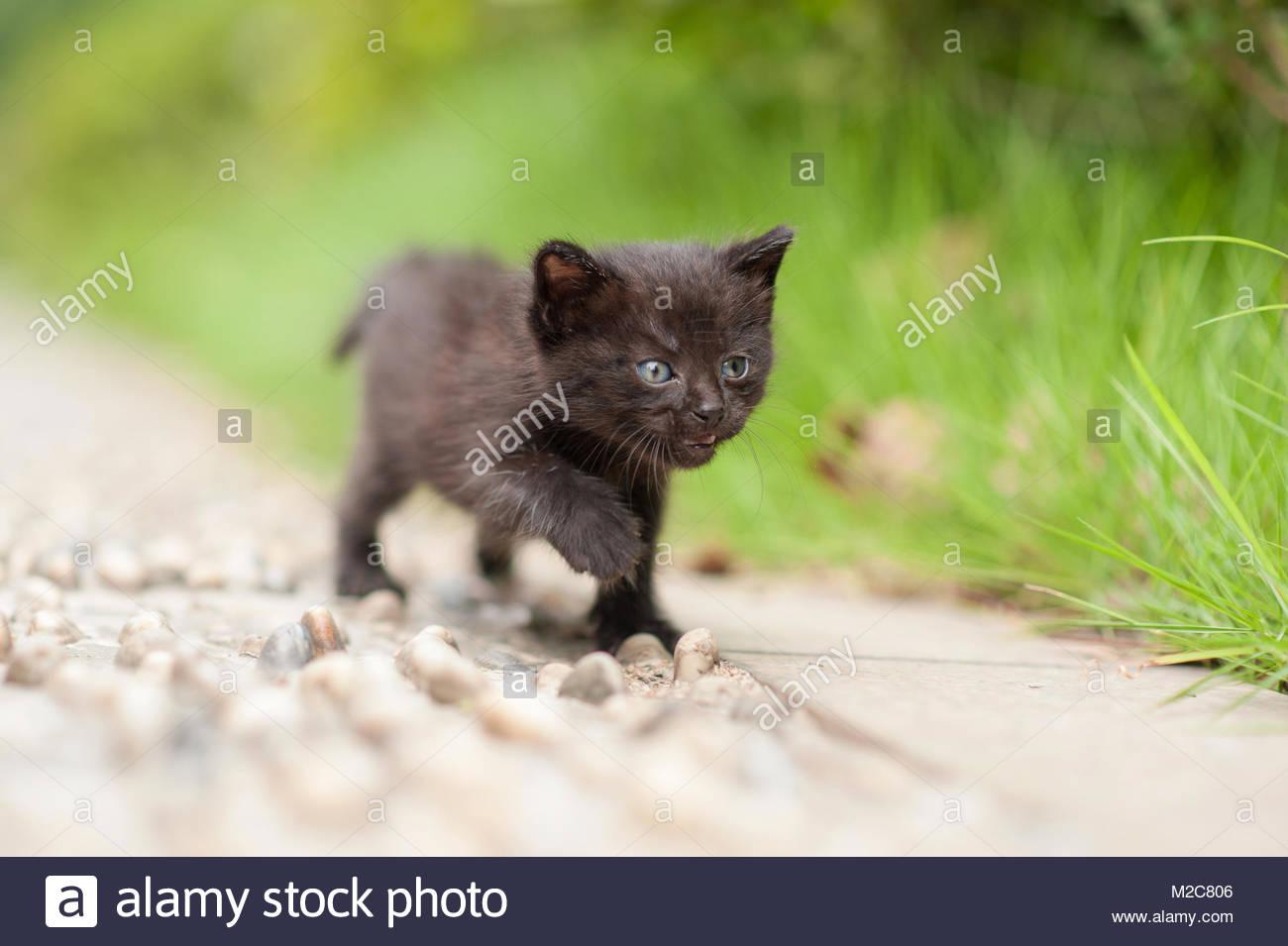 Petsmart Fairfax Cat Adoption