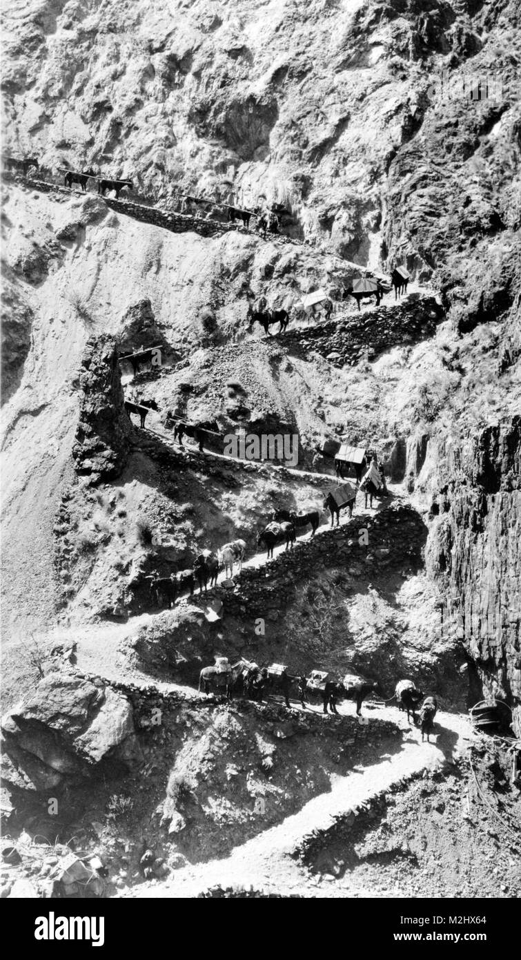 Pack Train, 20th Century - Stock Image