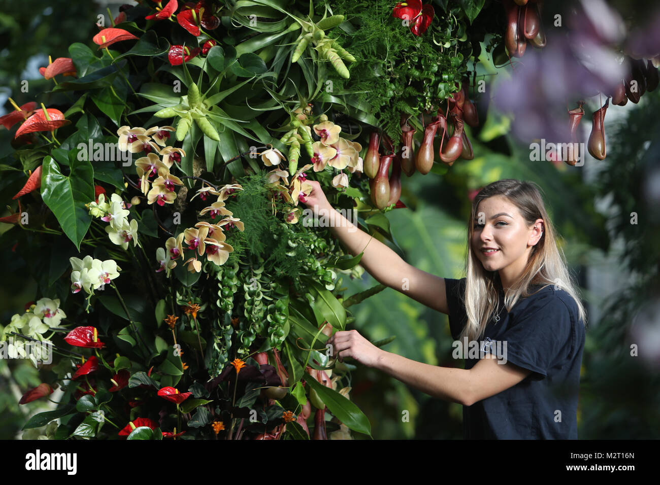 London UK 8 February 2018 Kew gardens getting ready for the 23h annual Kew Gardens Orchid Festival.Jennie Forgie - Stock Image