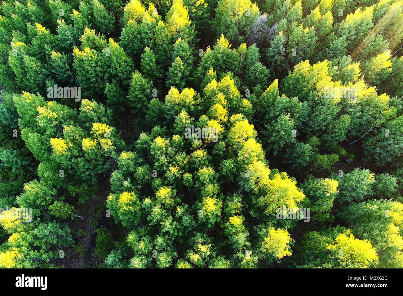 Greater Khingan Range scenery of Heilongjiang Province - Stock Image