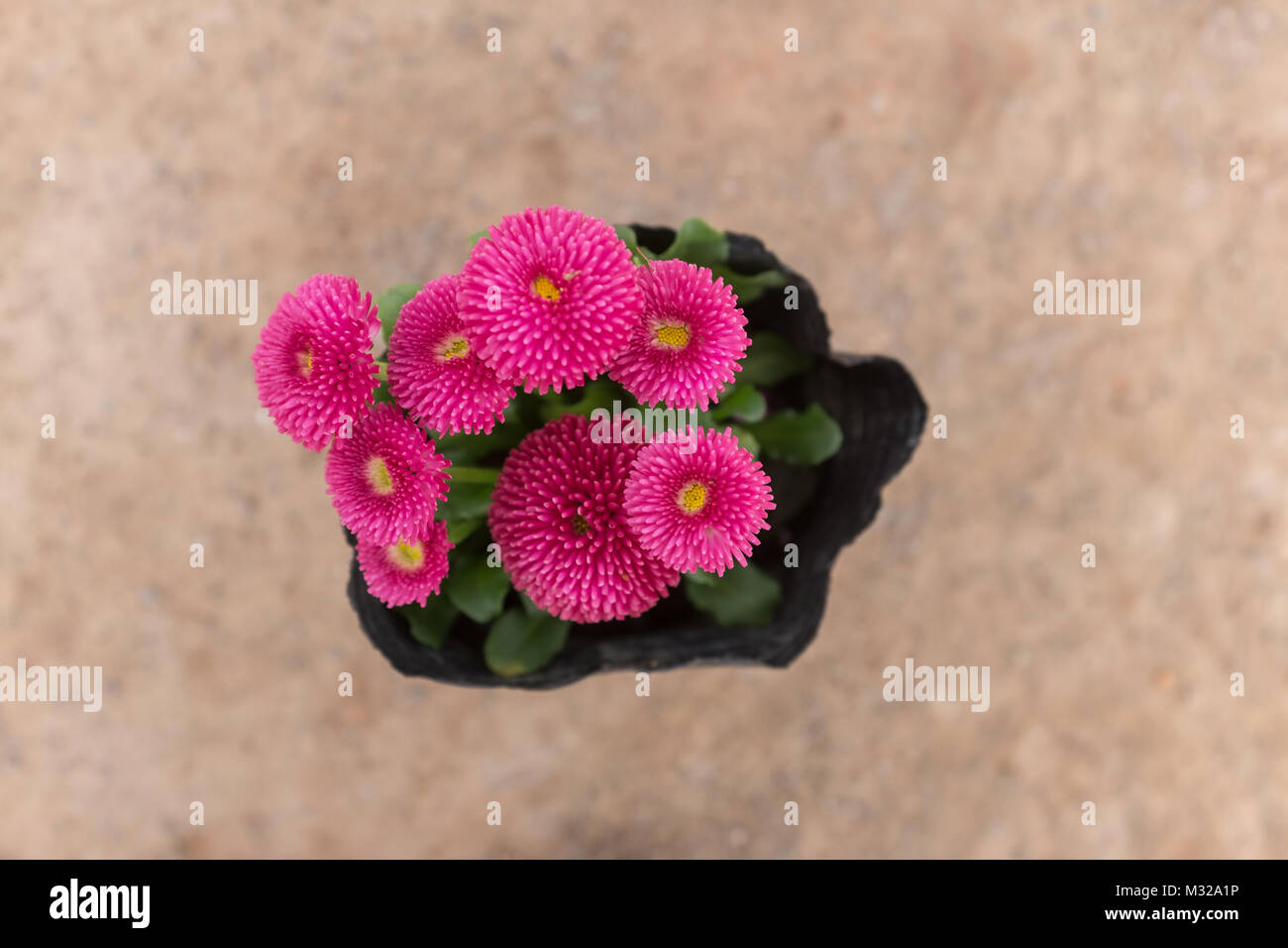 Flowers and plants - Stock Image