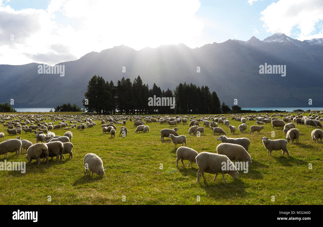 South island scenery of New Zealand - Stock Image