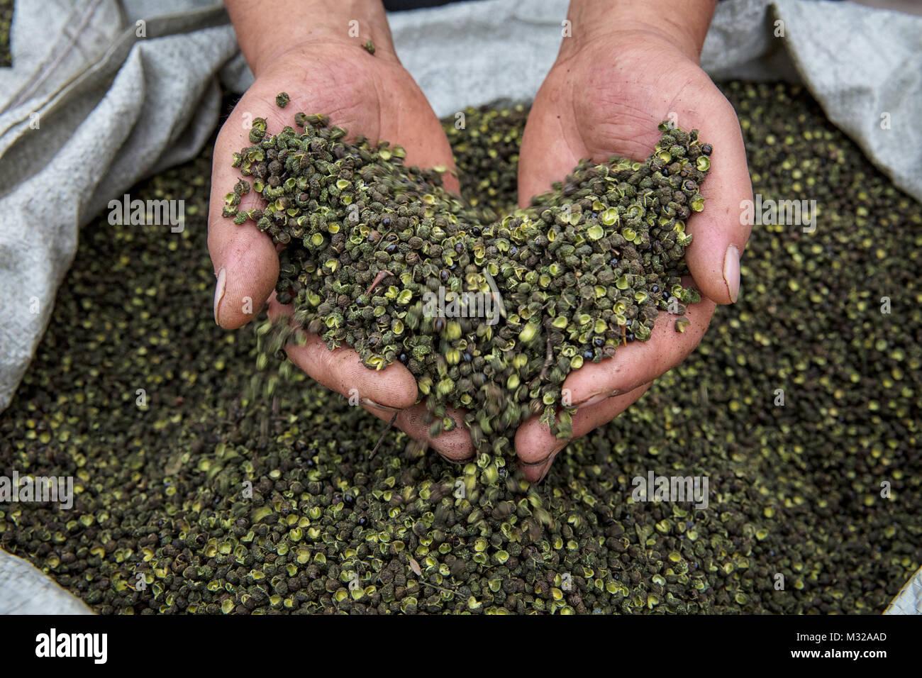 Sichuan Pepper - Stock Image