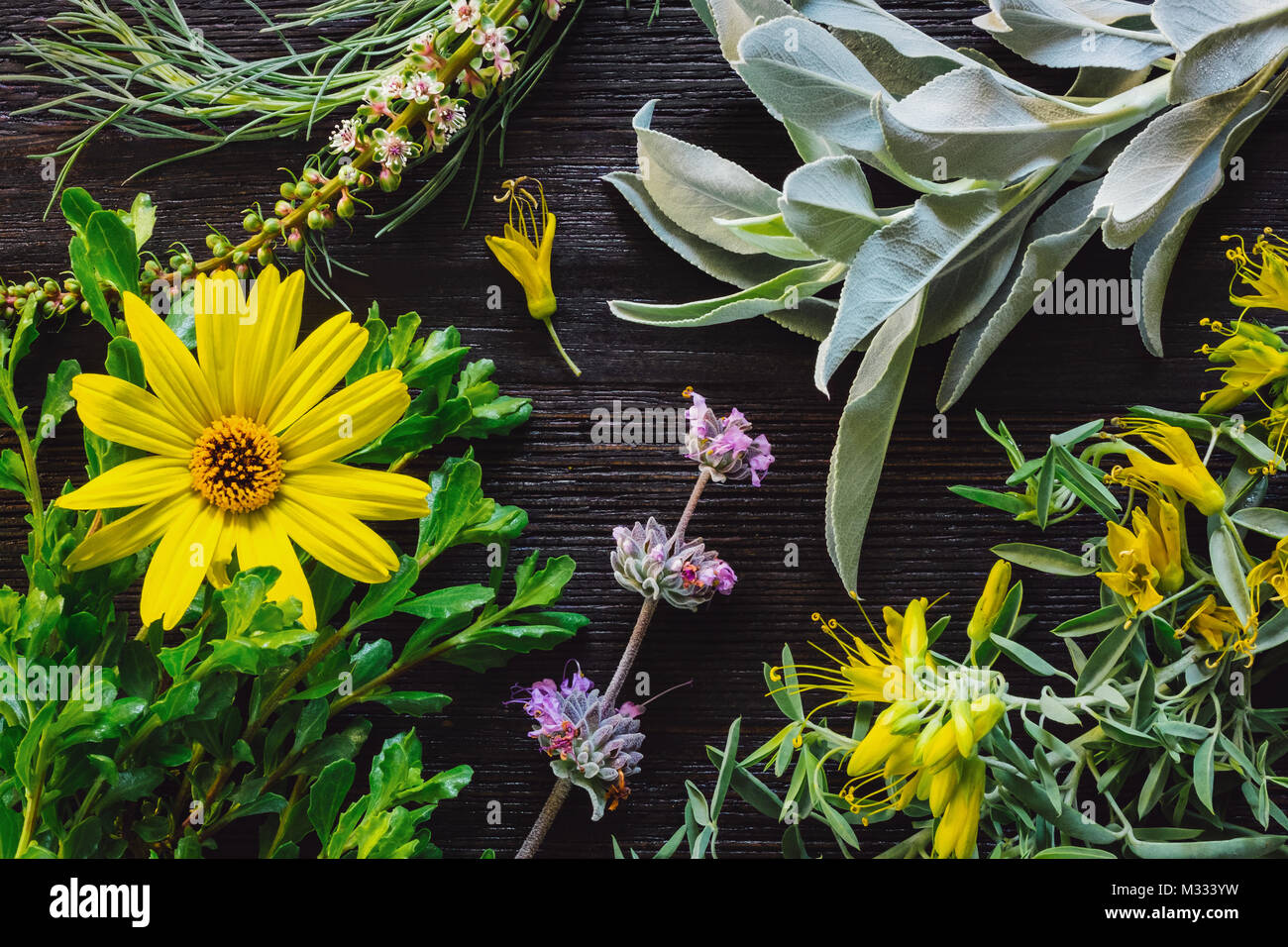 A Collection of California Native Plants on Dark Table - Stock Image