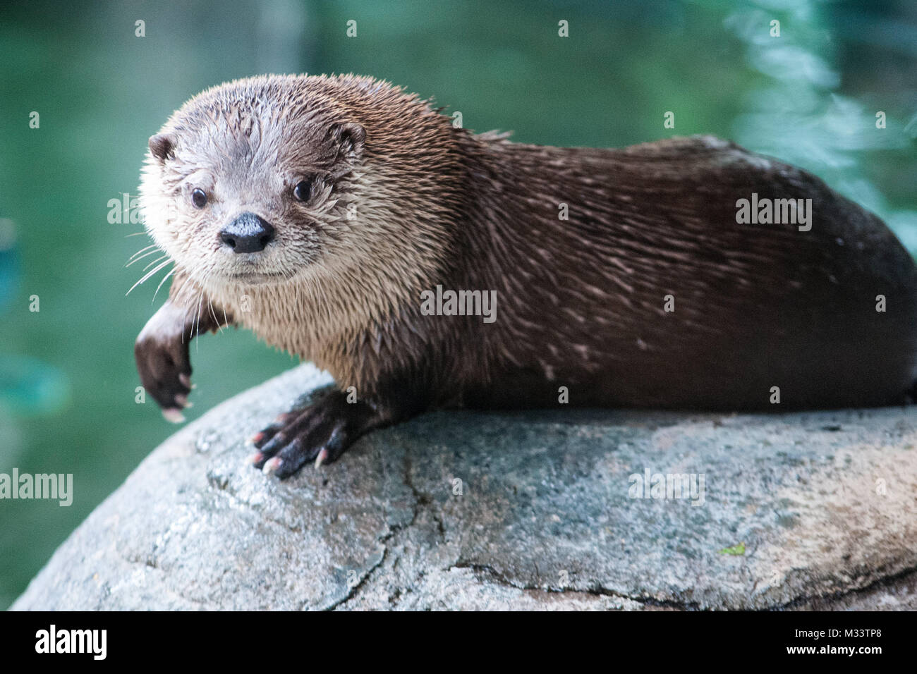 otter rock chat sites Search the world's information, including webpages, images, videos and more google has many special features to help you find exactly what you're looking for.