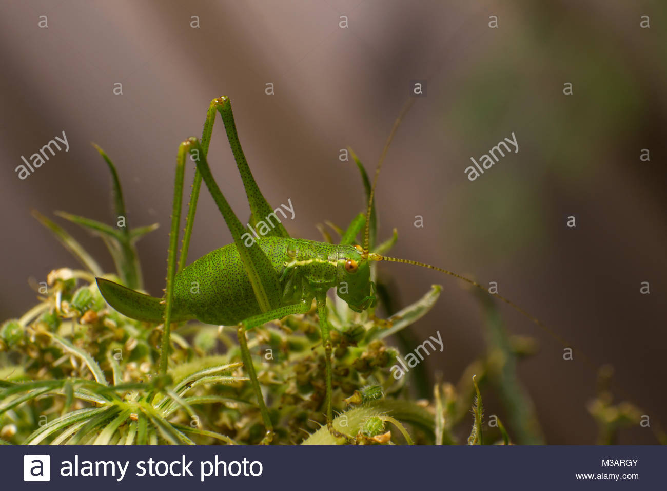 little green model - Stock Image