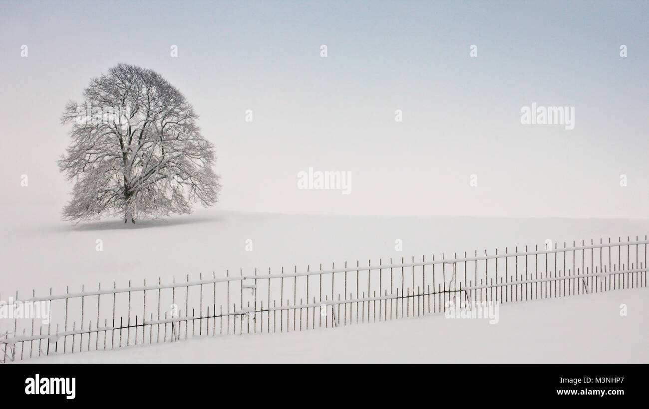A single tree alone on a snowy day - Stock Image