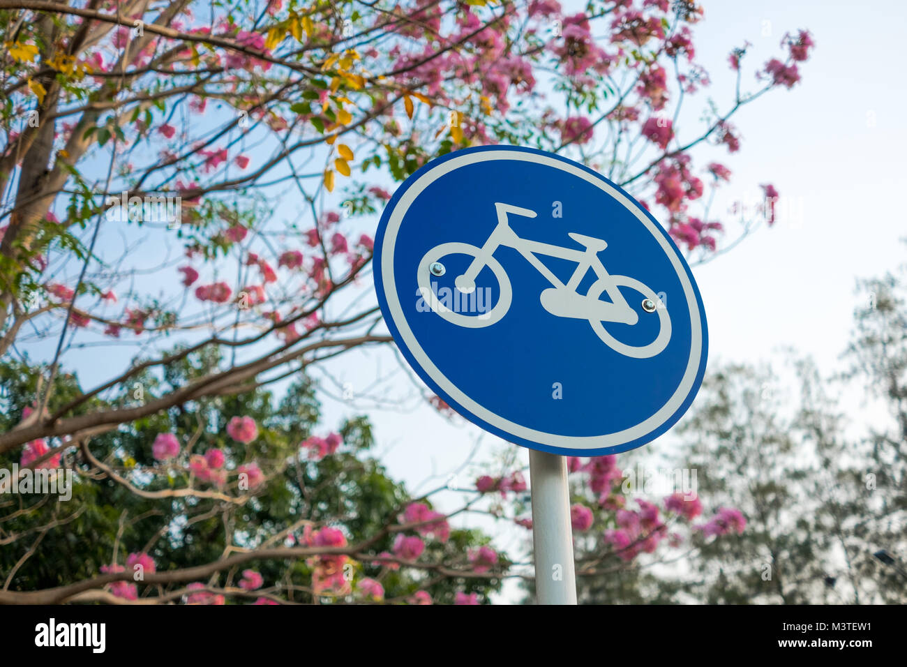 Pink And Blue Bicycle Stock Photos Amp Pink And Blue Bicycle