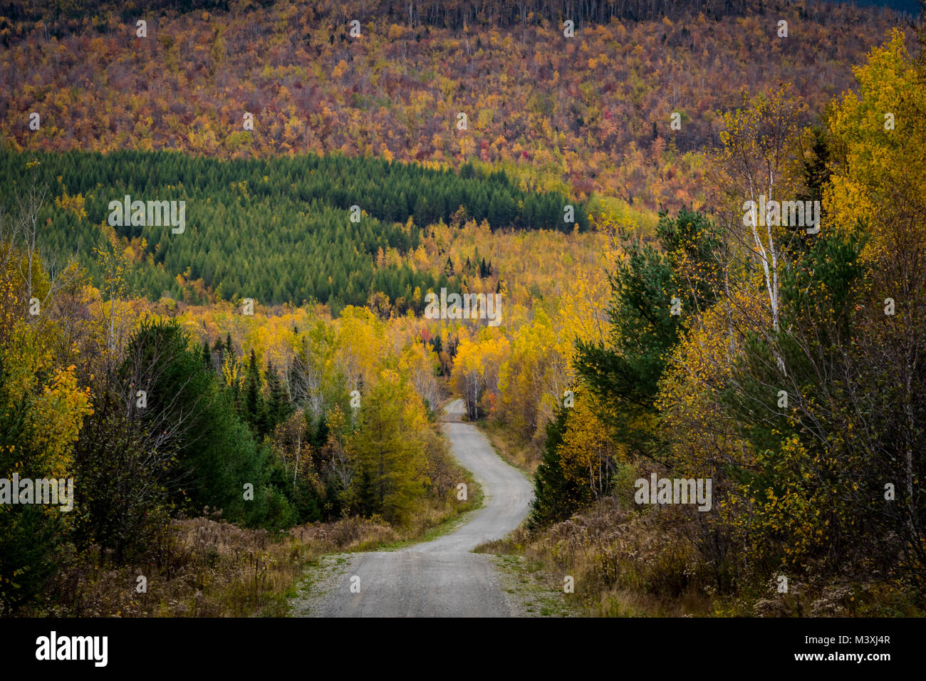 Dirt Road Snakes Through Colorful Woods - Stock Image