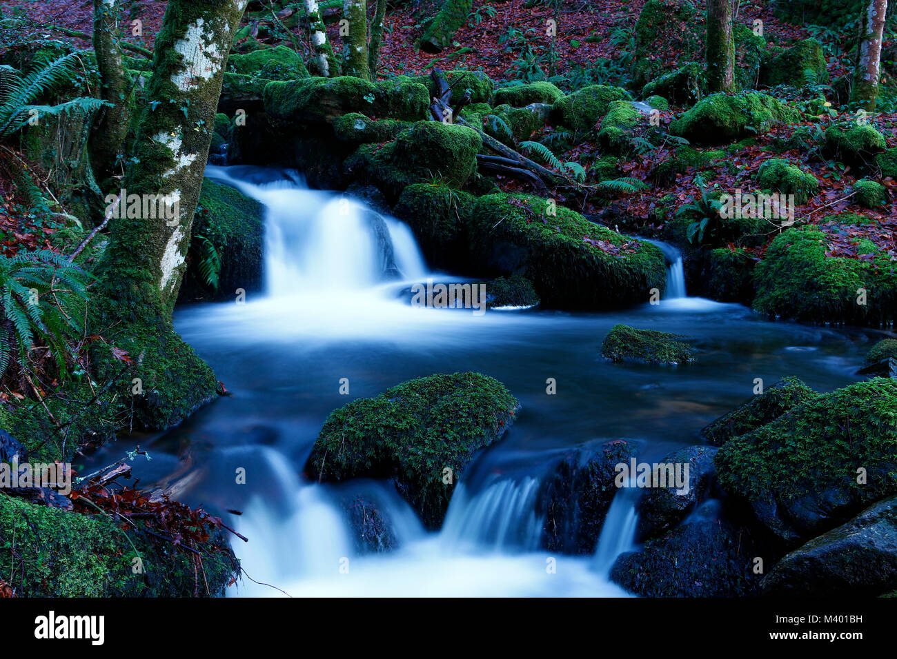 Buckland woods stunning scenery with the river flowing through - Stock Image