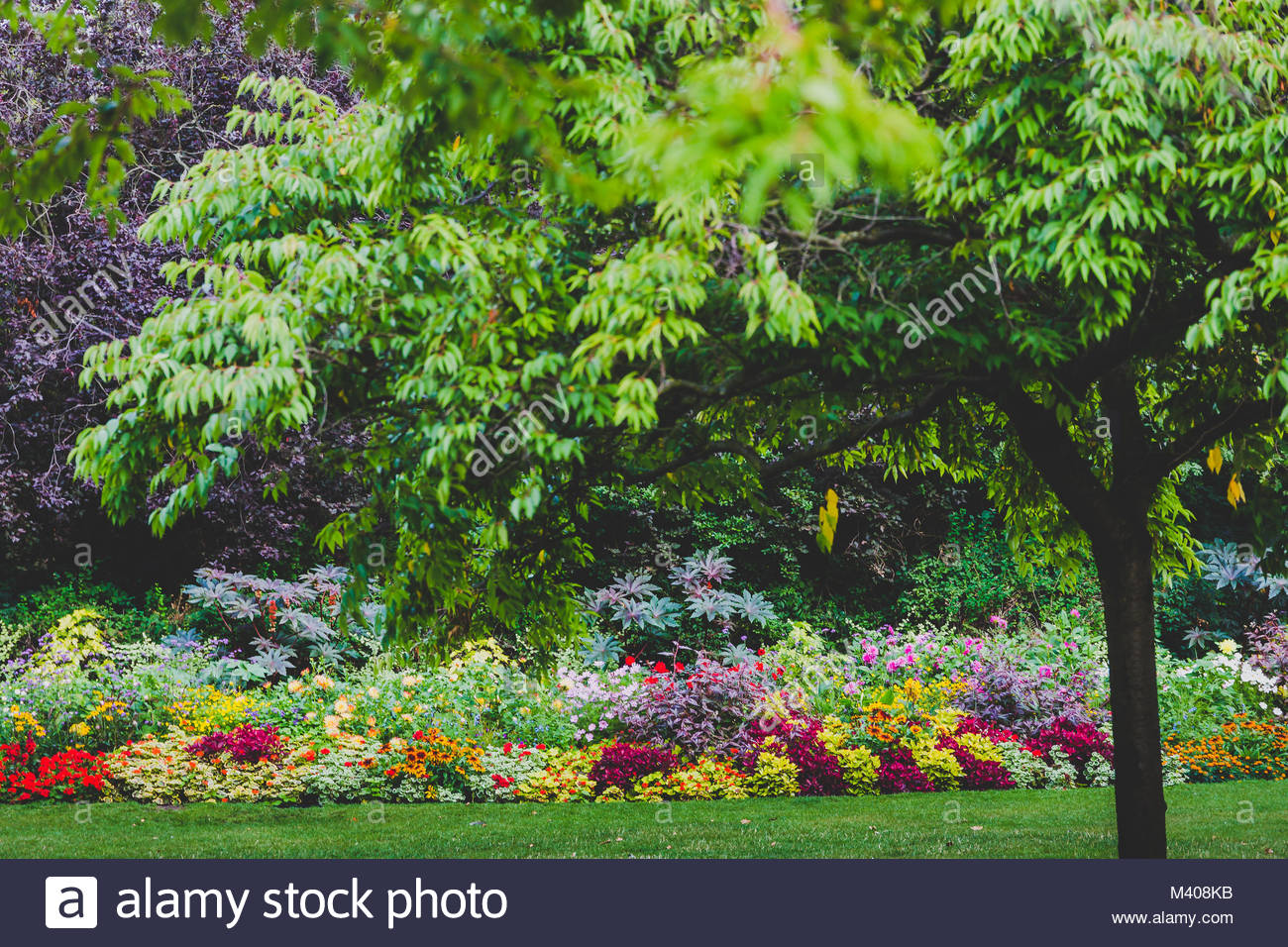 detail of lushy green city park with lines of trees with colorful flowers (location Green Park London) - Stock Image