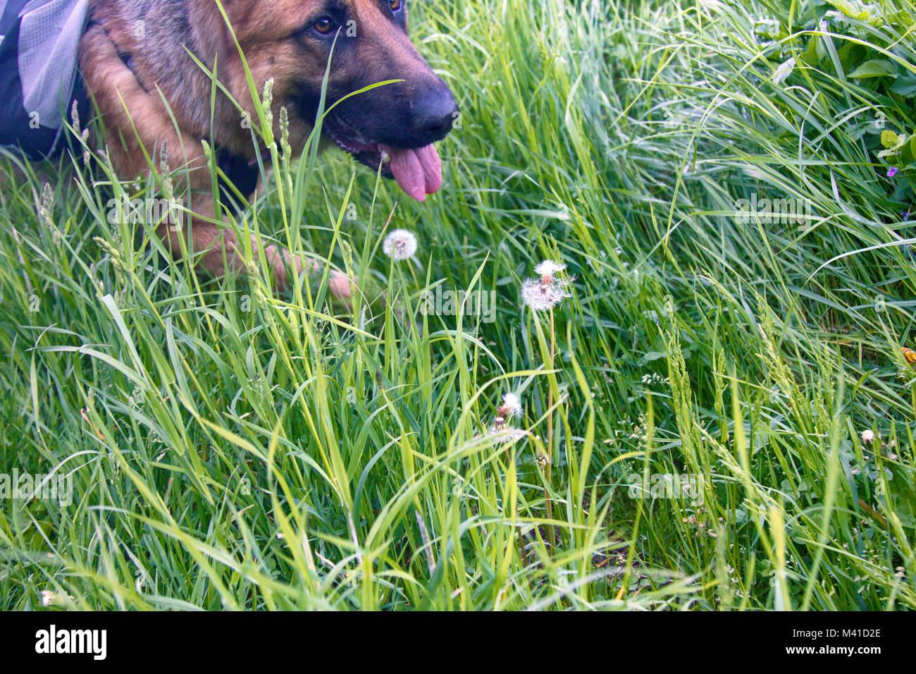 Dog Walk Tracker