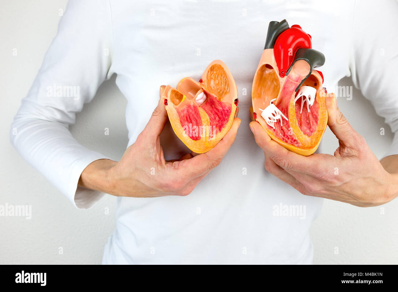 Woman holds model heart at white body - Stock Image
