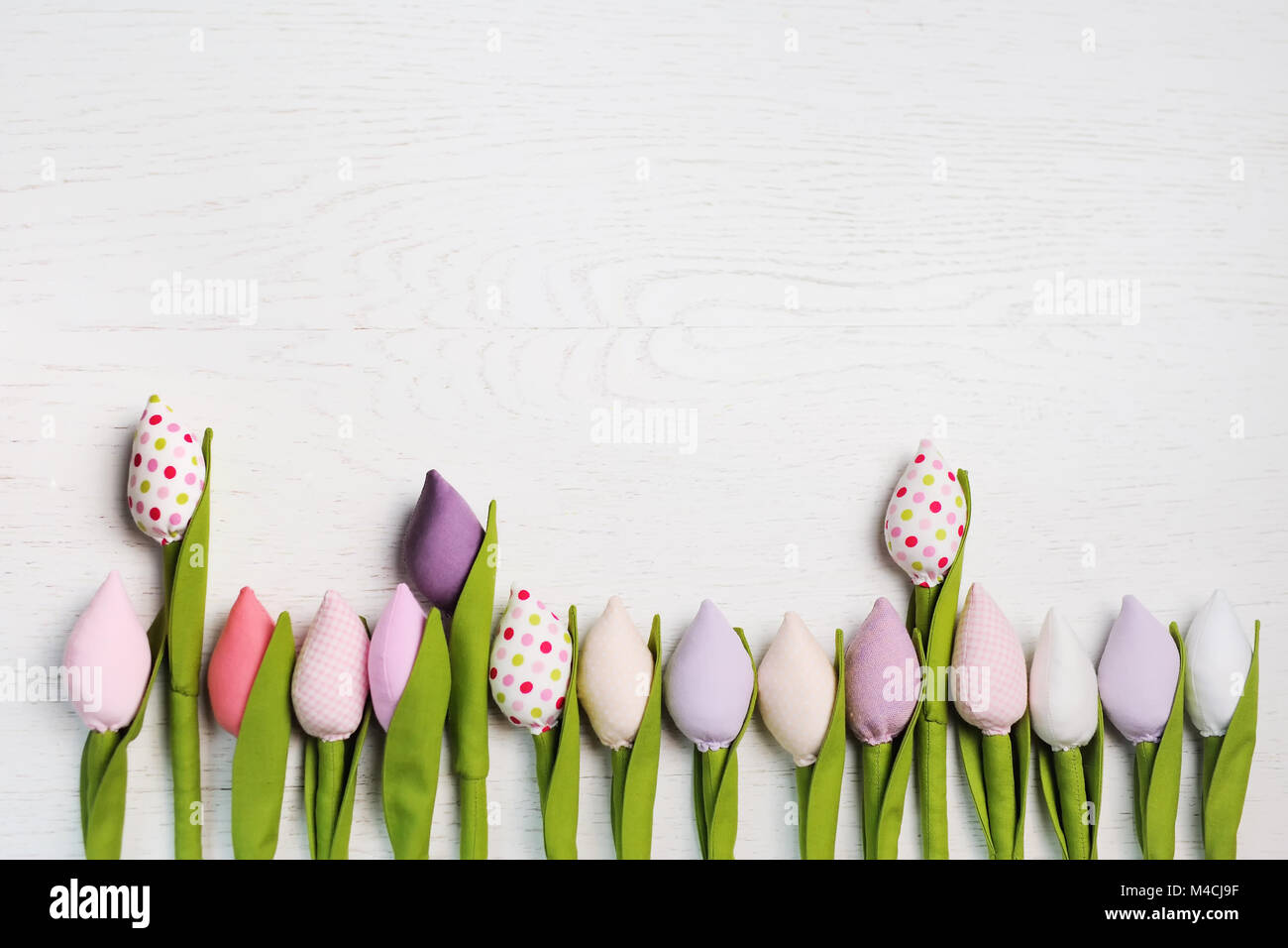 beautiful spring tulip flower flowers on a white background  - Stock Image