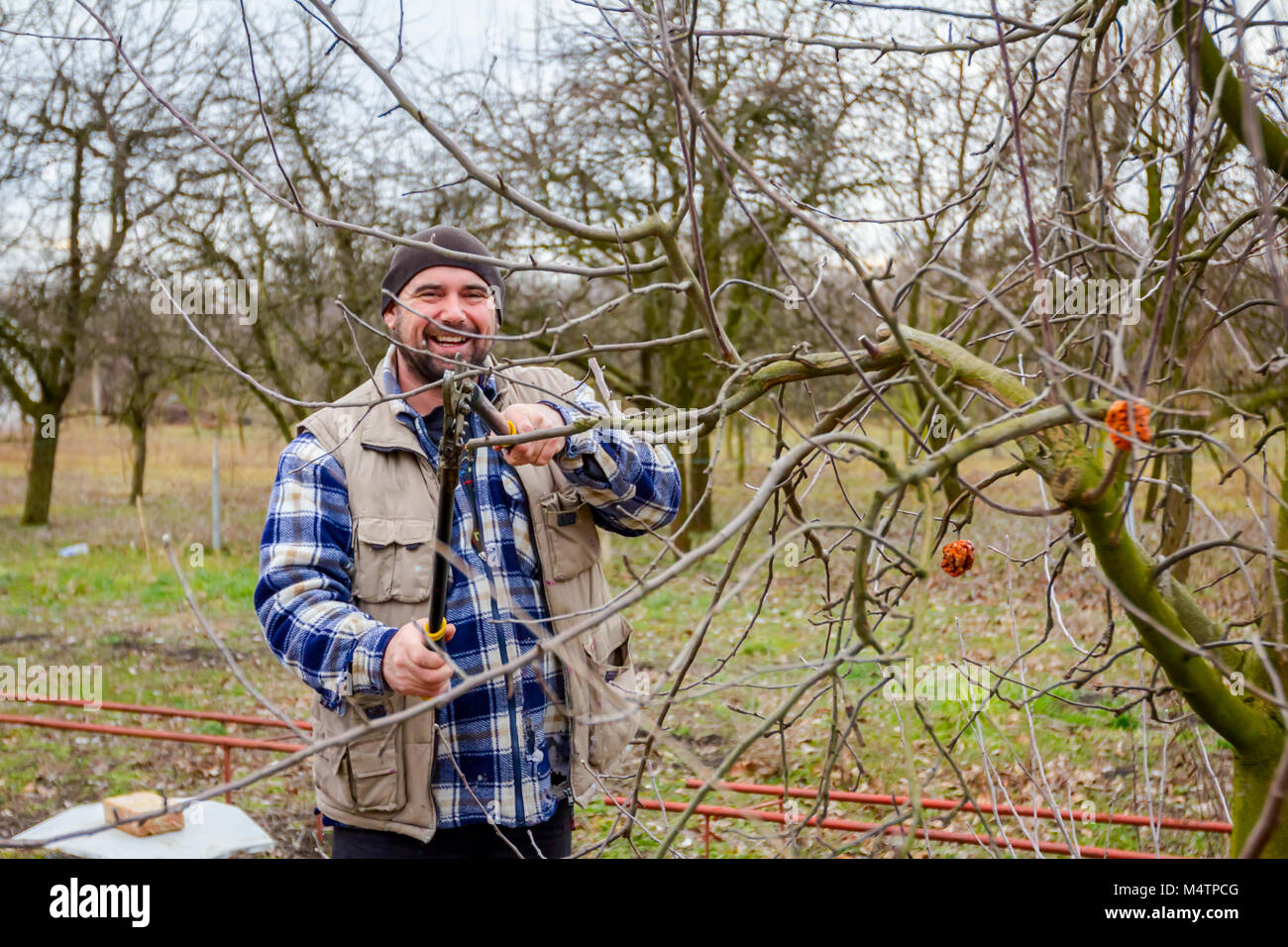 Tree Branches Cut Off Stock Photos Amp Tree Branches Cut Off