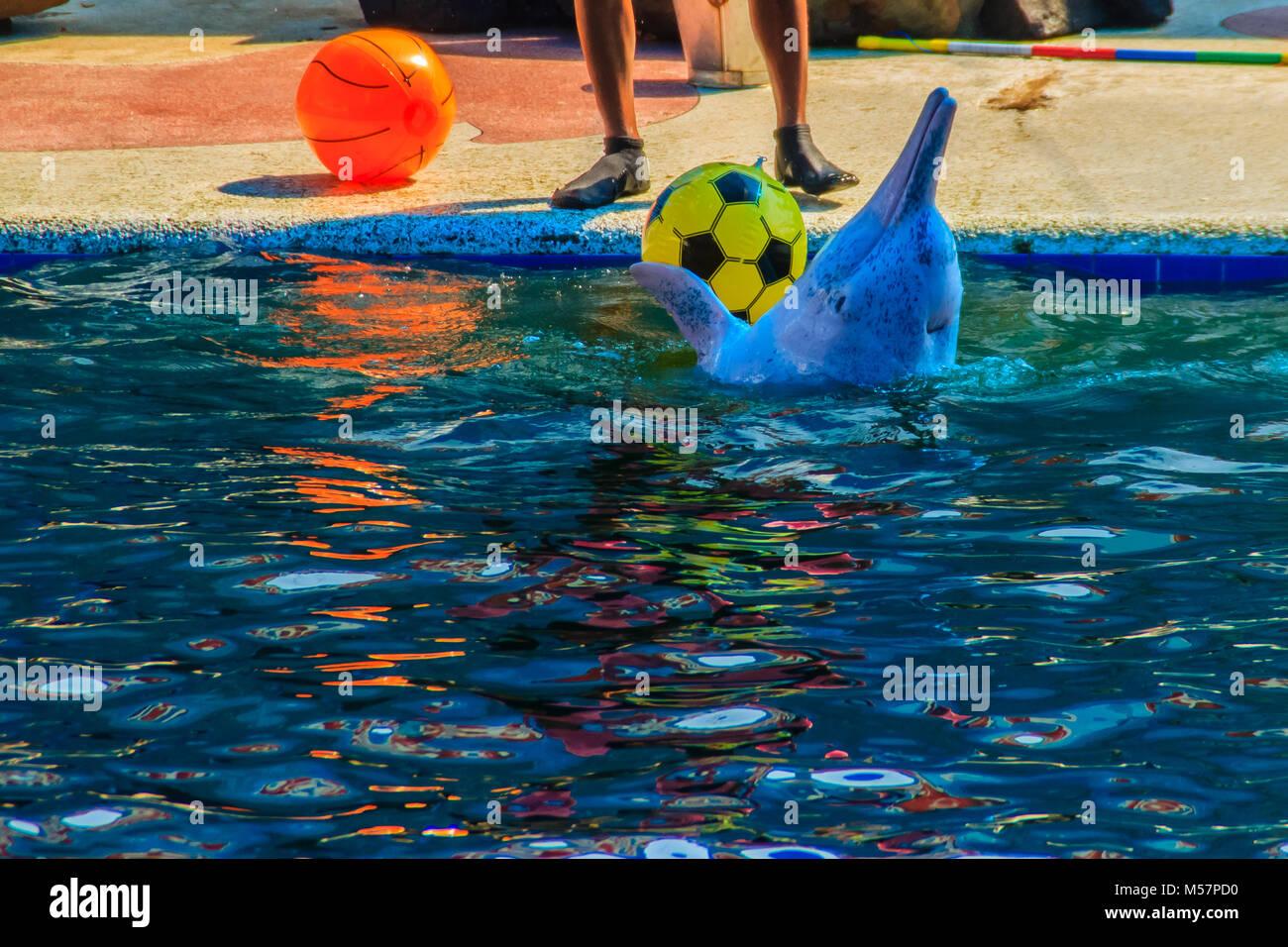 Cute Dolphin Stock Photos Cute Dolphin Stock Images Alamy