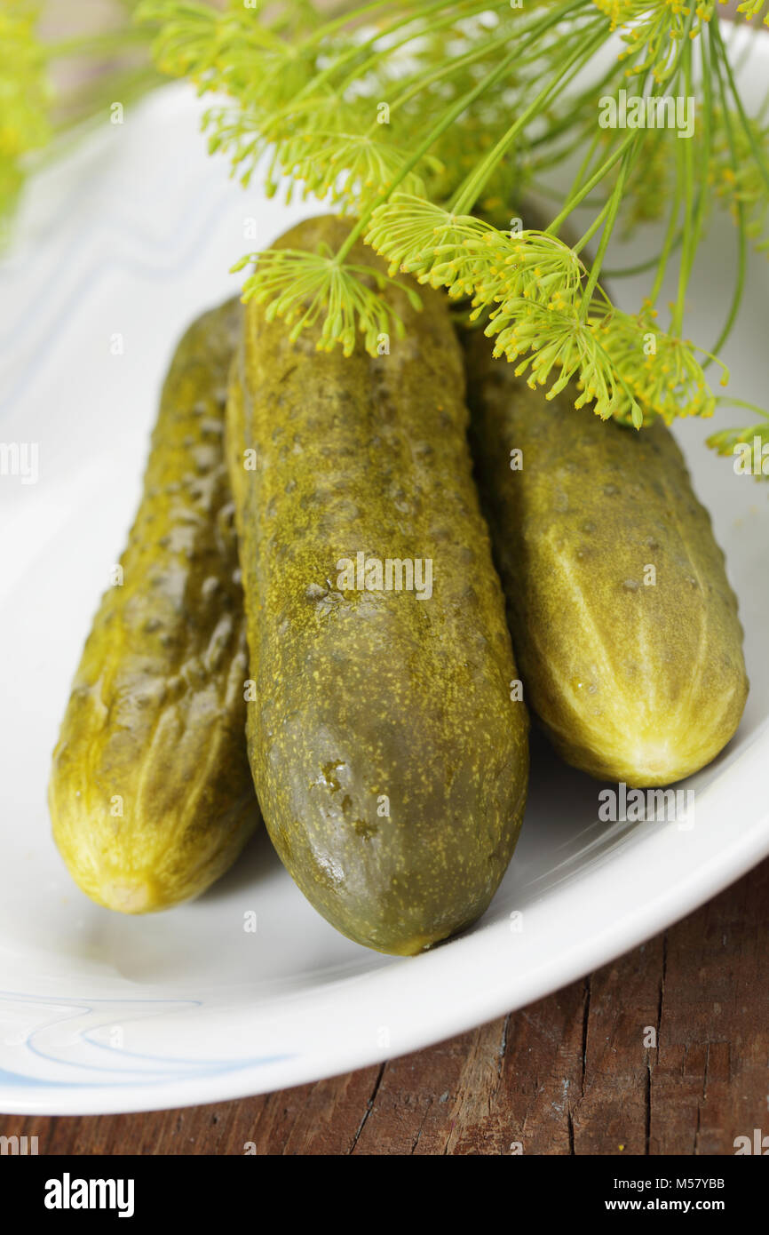 Pickled cucumbers with dill flowers on white plate - Stock Image