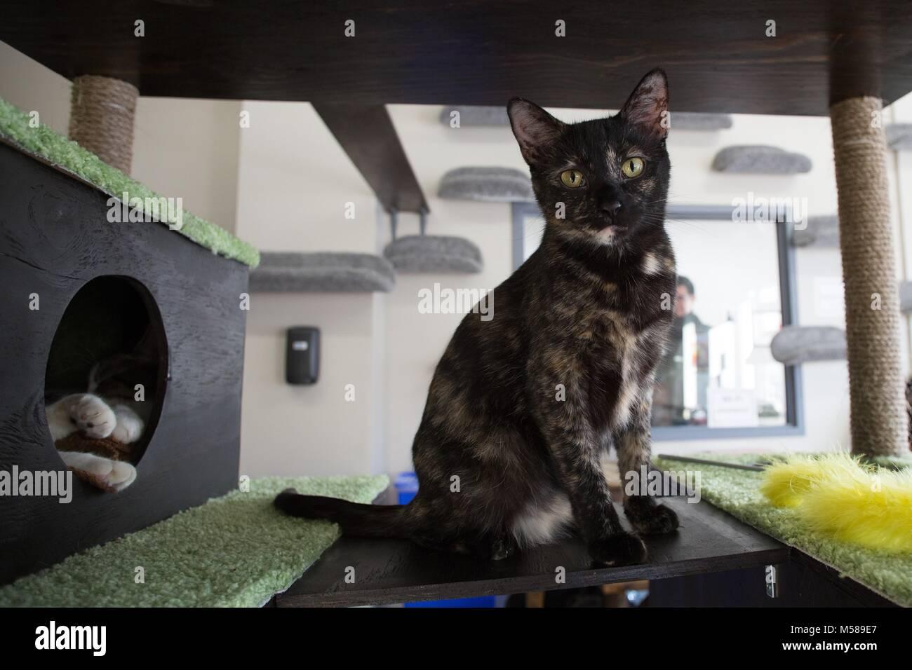 persian kitten for sale texas