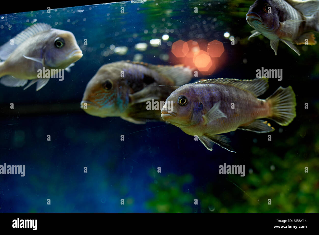 Fish hawaii red stock photos fish hawaii red stock for Dream about fish out of water