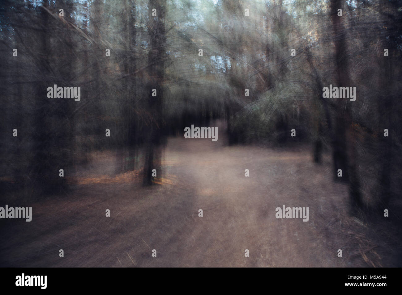 Blurred motion, path leading through forest at dawn. - Stock Image